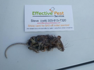 Effective Pest Services of Northern Colorado